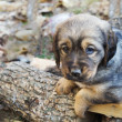 Stock Photo: Puppy in yard