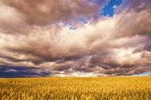Cielo nublado — Foto de Stock