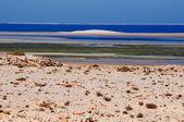 Dunes on beach — Stock Photo