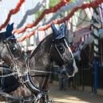 Horses — Stock Photo #26847593