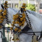 Horses — Stock Photo #26847611