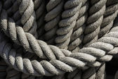 Ropes on a sheep strung together — Stock Photo
