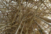 Interweaving of bamboo canes — Stock Photo