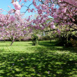 Stock Photo: Spring Blossom, Heaton Park, Manchester United Kingdom