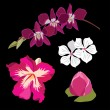 Set of realistic flowers, isolated on black background. - Stockvectorbeeld