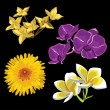 Set of realistic flowers, isolated on black background - Image vectorielle