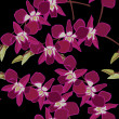Floral seamless pattern with orchids, hand-drawing. — Image vectorielle