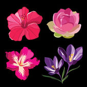 Set of realistic flowers, isolated on black background. — 图库矢量图片