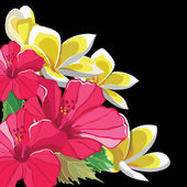 Beautiful floral pattern with hibiscus and frangipani — Stock Vector