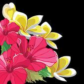 Magnifique motif floral d'hibiscus et de frangipaniers — Vecteur