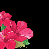 Floral pattern with hibiscus. — Stock Vector