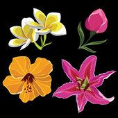 Conjunto de flores realistas, aislado sobre fondo negro — Vector de stock