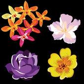 Set van realistische bloemen, geïsoleerd op zwarte achtergrond. — Stockvector