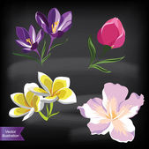 Set of realistic flowers, isolated on black background. — Stock Photo