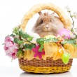Easter composition — Stock Photo #22708335