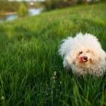 緑の草原犬 — ストック写真 #25931111