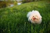 Dog on green grass — Stock Photo
