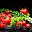 Tomatos and greenery in water — Stock Photo