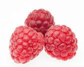 Tree big red raspberries — Foto Stock