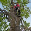 Stock Photo: Tree surgeon