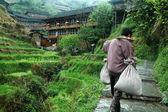 Rice farmer — Stock Photo