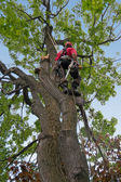 Tree surgeon — Stock Photo