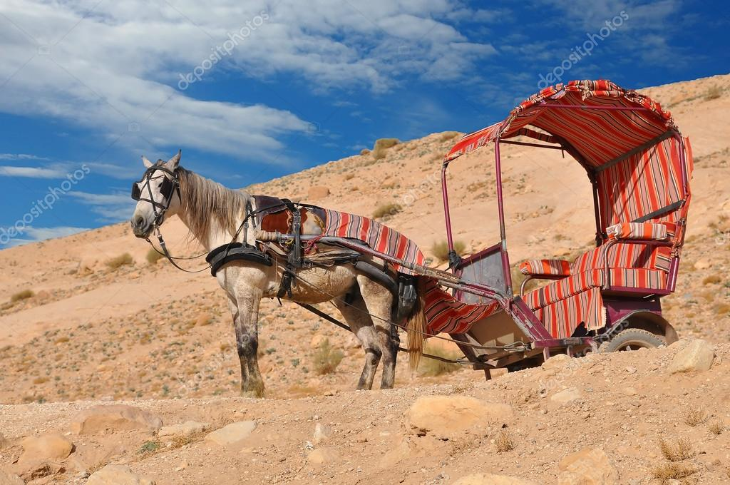 Donkey used for transportation, Petra Jordan — Stock Photo #14577417