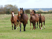 Running Horse Herd — Stock Photo