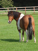 Cute Pony — Stock Photo