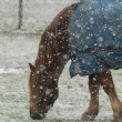 Lonely Horse In The Snow — Stock Photo