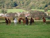 Paard kudde — Stockfoto
