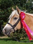 Winning Horse — Stock Photo