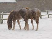 Horses In A Snow Storm — Stock Photo