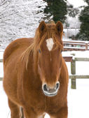 Horse In The Snow — Stock Photo