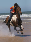 Gallop On The Beach — Stock Photo