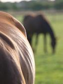 Horse Abstract — Stock Photo