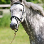 Horse Head Shot — Stock Photo