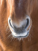 Horse Abstract — Foto Stock