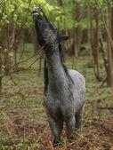 Wild Horse Eating — Stock Photo