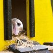 Rabbit In Hutch — Stock Photo