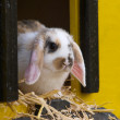 Cute Rabbit — Stock Photo #24570181