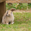 Cute Rabbit — Stock Photo #24570239