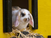 Cute Rabbit — Stock Photo