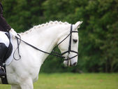 Dressage Abstract — Stock Photo