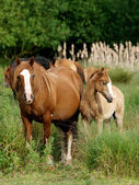 Mares and Foals — Stock Photo