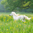 Stock Photo: Beutiful Horse Running