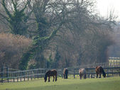 Grazende paarden — Stockfoto