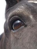 Pferd-auge — Stockfoto
