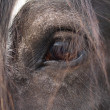 Horse Eye — Stock Photo #36348415