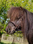 Pony Head Shot — Stock fotografie